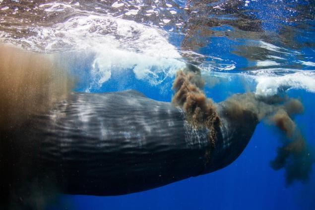 5 câu chuyện chứng minh hậu môn có thể là thứ kỳ quặc nhất thế giới động vật - Ảnh 5.