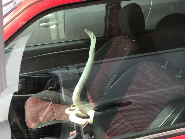 Cánh tài xế kể về những thứ quái dị trên đường, không chụp ảnh chắc chẳng mấy ai tin - Ảnh 11.