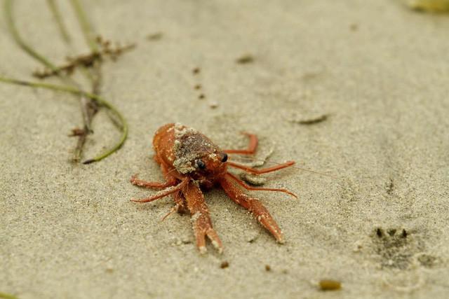 Bi kịch từ con người: Biến đổi khí hậu đang khiến sinh vật biển rơi vào cảnh mù lòa - Ảnh 2.