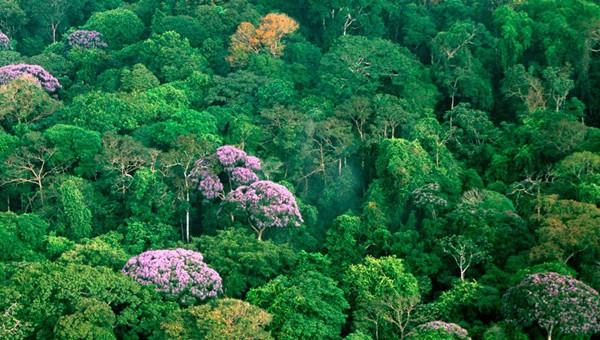 Mặt tốt của biến đổi khí hậu: thực vật đang phát triển nhanh đến bất ngờ? - Ảnh 2.