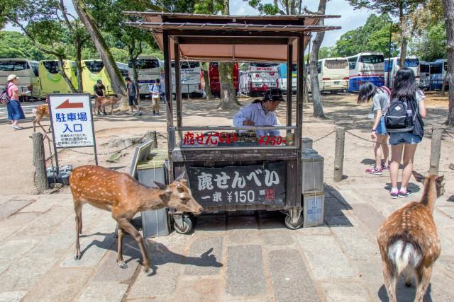 Hươu Nara nổi tiếng Nhật Bản chết đói vì ăn phải 3,2kg rác nhựa - Ảnh 1.
