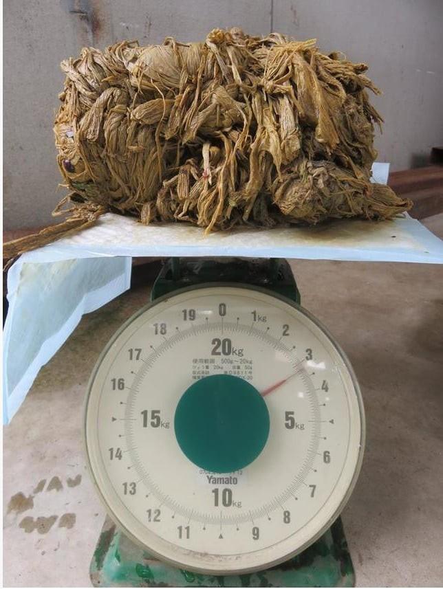 Hươu Nara nổi tiếng Nhật Bản chết đói vì ăn phải 3,2kg rác nhựa - Ảnh 3.