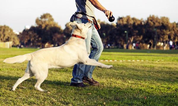 Người nuôi mèo thông minh hơn, nhưng người nuôi chó lại dễ tồn tại trong xã hội và đây là lý do - Ảnh 3.