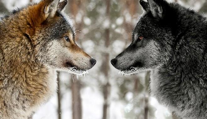 Qualcomm vs. Huawei – Cuộc chiến không khoan nhượng giữa hai con sói dữ đã diễn ra như thế nào? - Ảnh 17.