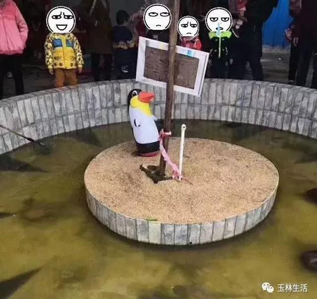 Bị internet la ó vì nhốt chó nhà vào chuồng sói, vườn thú Trung Quốc bảo làm thế cho chúng có bạn - Ảnh 3.