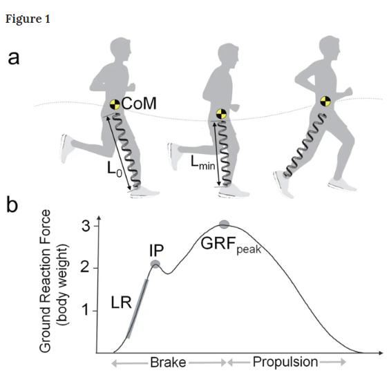 Nghịch lý giày chạy bộ: Công nghệ tốt vẫn làm tăng nguy cơ chấn thương - Ảnh 3.