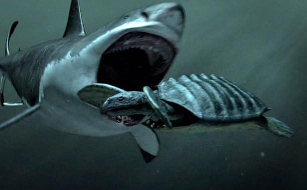 Giả thuyết về sự tồn tại về Megalodon, siêu cá mập có thật hay chỉ là cú lừa của truyền thông? - Ảnh 1.