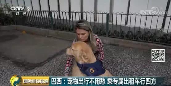 Brazil mở dịch vụ taxi dành riêng cho chó, mèo và nhiều con khác nữa - Ảnh 1.