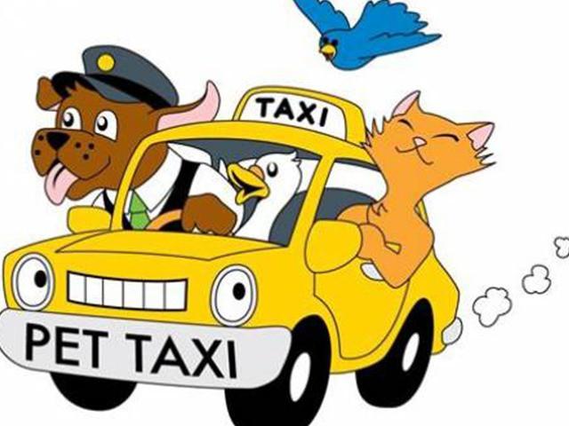 Brazil mở dịch vụ taxi dành riêng cho chó, mèo và nhiều con khác nữa - Ảnh 2.