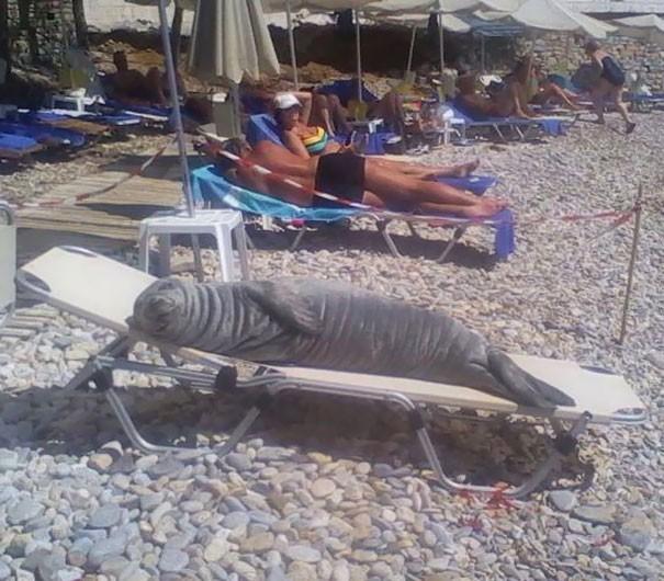 Giải trí cực mạnh với 15 thứ siêu kỳ cục trên bãi biển, số 3 sẽ khiến nhiều anh trai giật mình - Ảnh 1.