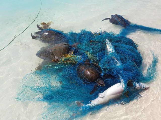 1000 con cá mập đang phải sống hết sức khổ sở - minh chứng rõ ràng nhất về tác hại của nhựa với đại dương - Ảnh 2.