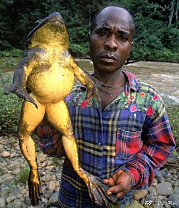 Beelzebufo - Loài ếch quỷ khổng lồ có thể nuốt chửng cả khủng long - Ảnh 2.
