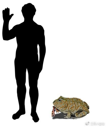 Beelzebufo - Loài ếch quỷ khổng lồ có thể nuốt chửng cả khủng long - Ảnh 3.