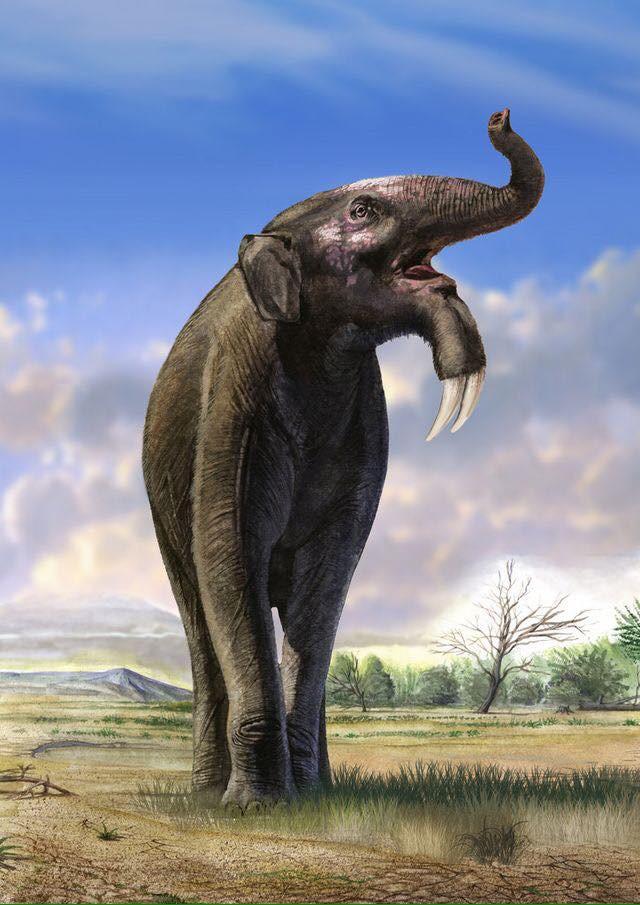 Có thể bạn chưa biết, tổ tiên của voi và tê giác cổ đại có vẻ ngoài quái dị hơn ngày nay nhiều! - Ảnh 2.
