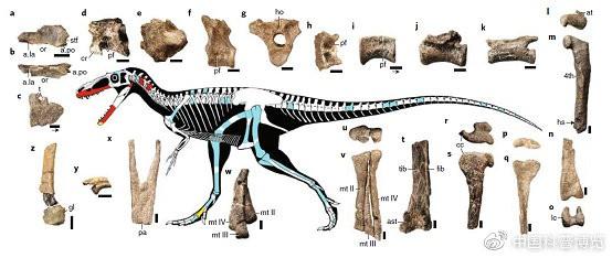 Bất ngờ phát hiện tổ tiên của khủng long bạo chúa chỉ có kích thước nhỉnh hơn một con chó - Ảnh 4.