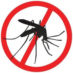 Bé nhỏ là thế, tại sao muỗi có thể đe dọa mạng sống của một nửa dân số thế giới? - Ảnh 11.