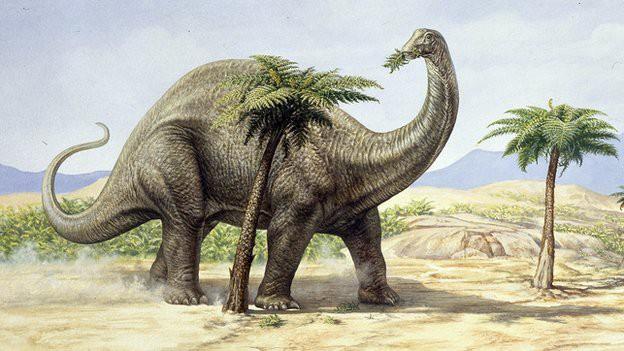 Thay đổi khí hậu khiến một loài cây hồi sinh sau 60 triệu năm ở Anh - Ảnh 1.