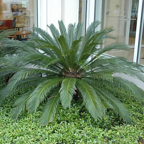 Thay đổi khí hậu khiến một loài cây hồi sinh sau 60 triệu năm ở Anh - Ảnh 2.