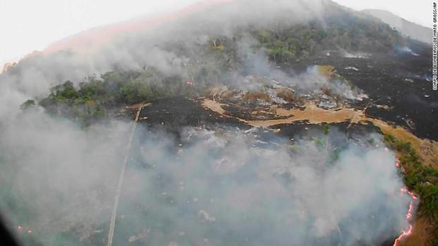 10% loài động vật trên hành tinh như sống trong hỏa ngục vì cháy rừng Amazon: Hậu quả kinh khủng hơn bất kì vụ cháy rừng nào khác - Ảnh 2.