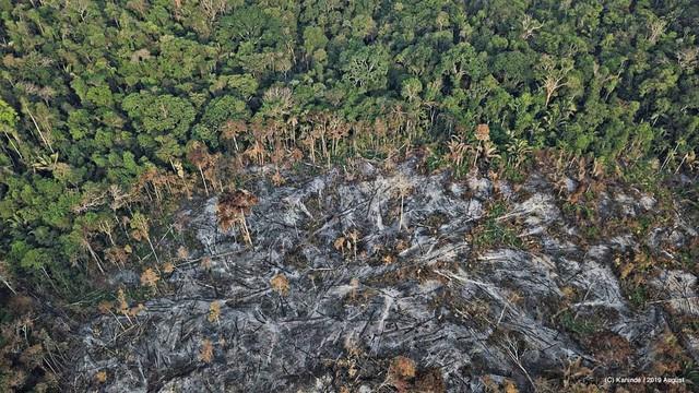 Nếu rừng Amazon biến mất, thế giới mất đi 20% lượng nước ngọt, 20% lượng oxy, con người chịu ảnh hưởng trực tiếp - Ảnh 1.