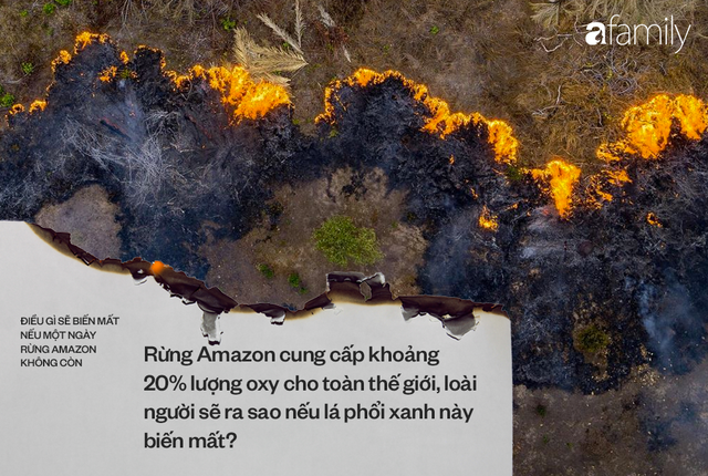 Nếu rừng Amazon biến mất, thế giới mất đi 20% lượng nước ngọt, 20% lượng oxy, con người chịu ảnh hưởng trực tiếp - Ảnh 3.
