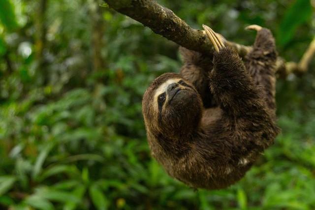 10% loài động vật trên hành tinh như sống trong hỏa ngục vì cháy rừng Amazon: Hậu quả kinh khủng hơn bất kì vụ cháy rừng nào khác - Ảnh 4.