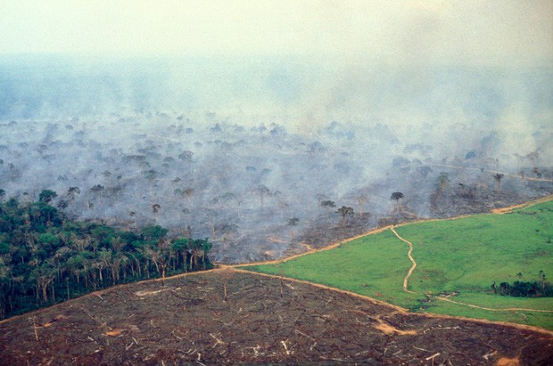 10% loài động vật trên hành tinh như sống trong hỏa ngục vì cháy rừng Amazon: Hậu quả kinh khủng hơn bất kì vụ cháy rừng nào khác - Ảnh 8.