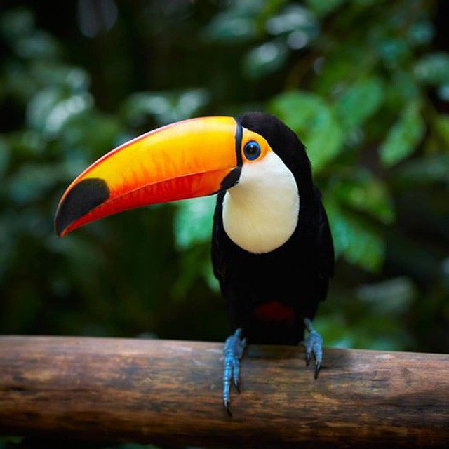 10% loài động vật trên hành tinh như sống trong hỏa ngục vì cháy rừng Amazon: Hậu quả kinh khủng hơn bất kì vụ cháy rừng nào khác - Ảnh 10.