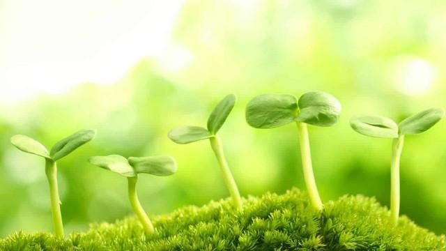 Đã có siêu thực phẩm có thể cứu đói cả nhân loại: Tất cả chỉ nhờ loại thực vật nhỏ bé này! - Ảnh 1.