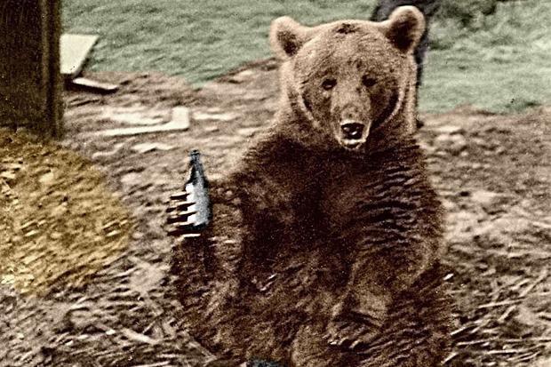 Huyền thoại hạ sĩ gấu: Uống bia hút thuốc như người, tham gia tải đạn trong Thế chiến II - Ảnh 2.