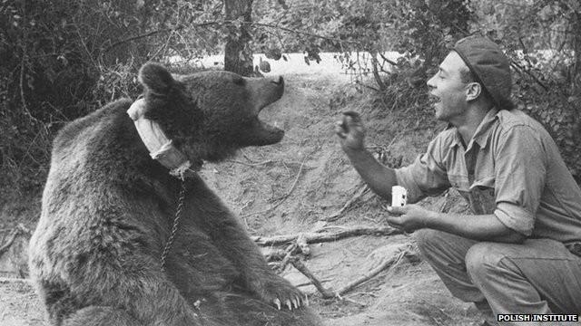 Wojtek: Chú gấu nghiện bia được lấy làm biểu tượng trên huy hiệu của lực lượng pháo binh Ba Lan - Ảnh 5.