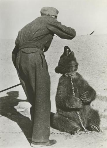 Wojtek: Chú gấu nghiện bia được lấy làm biểu tượng trên huy hiệu của lực lượng pháo binh Ba Lan - Ảnh 3.