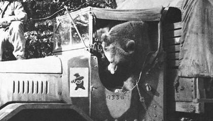 Wojtek: Chú gấu nghiện bia được lấy làm biểu tượng trên huy hiệu của lực lượng pháo binh Ba Lan - Ảnh 7.
