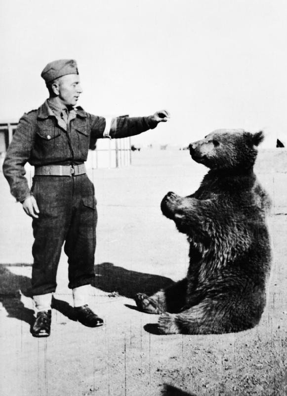 Wojtek: Chú gấu nghiện bia được lấy làm biểu tượng trên huy hiệu của lực lượng pháo binh Ba Lan - Ảnh 4.