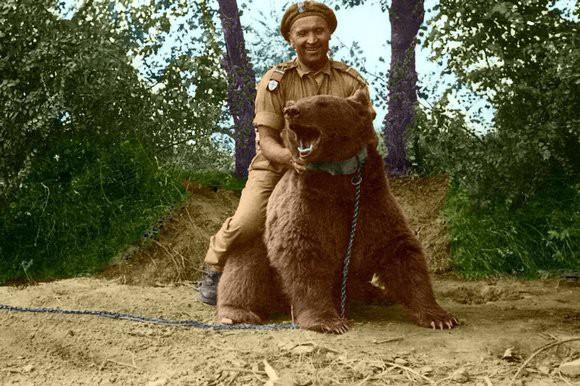 Wojtek: Chú gấu nghiện bia được lấy làm biểu tượng trên huy hiệu của lực lượng pháo binh Ba Lan - Ảnh 9.