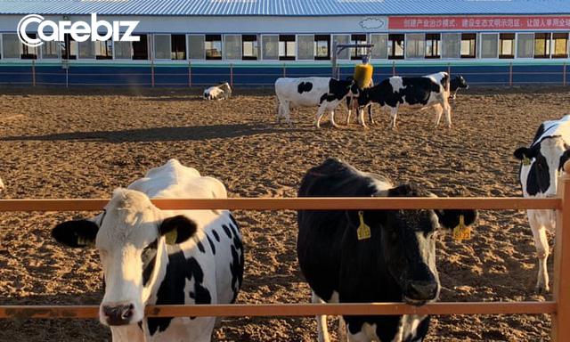 Cơn cuồng sữa của Trung Quốc đang hủy diệt thế giới như thế nào? - Ảnh 4.