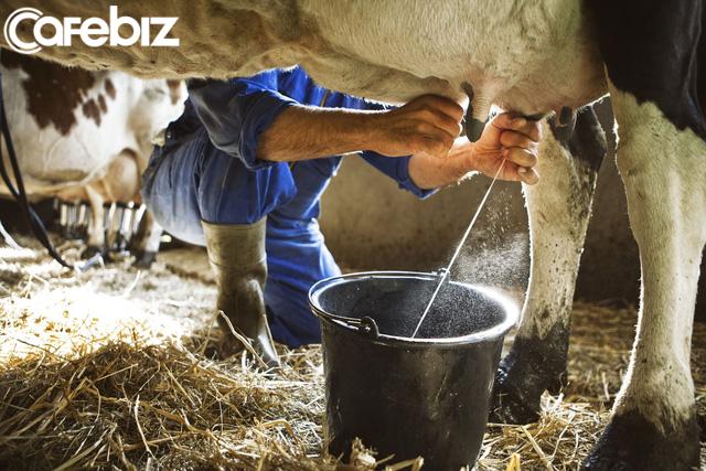 Cơn cuồng sữa của Trung Quốc đang hủy diệt thế giới như thế nào? - Ảnh 5.