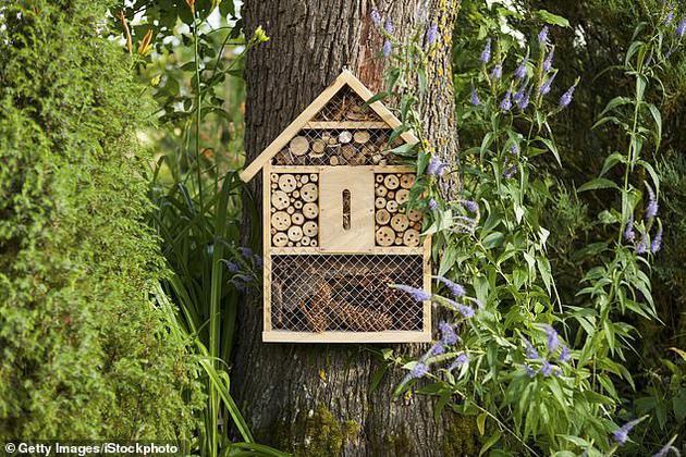 Nếu loài ong biến mất, nhân loại chỉ có thể tồn tại thêm được 4 năm? - Ảnh 3.