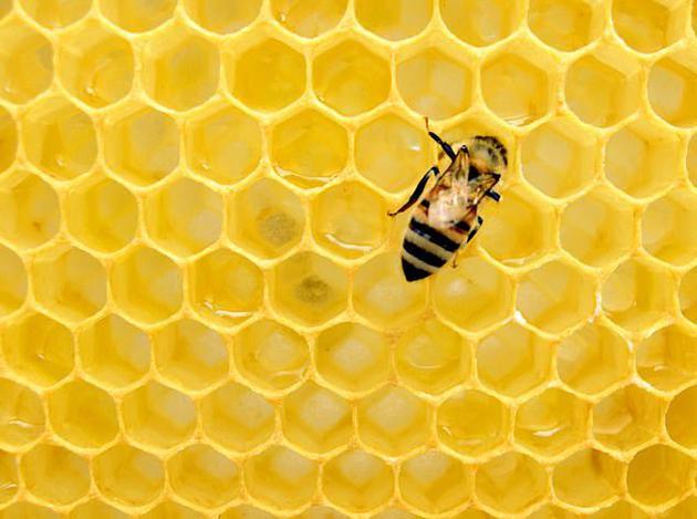 Nếu loài ong biến mất, nhân loại chỉ có thể tồn tại thêm được 4 năm? - Ảnh 1.