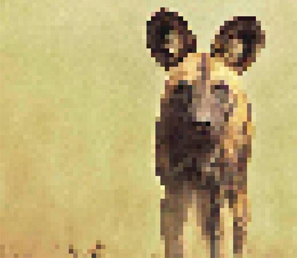 Sự thật đáng buồn về 22 bức tranh của các loài động vật có số lượng pixel tương ứng với số cá thể còn sống - Ảnh 1.