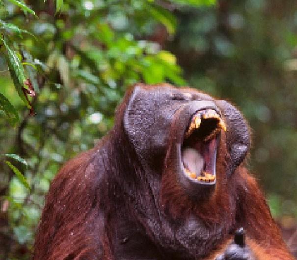 Sự thật đáng buồn về 22 bức tranh của các loài động vật có số lượng pixel tương ứng với số cá thể còn sống - Ảnh 10.