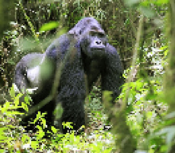 Sự thật đáng buồn về 22 bức tranh của các loài động vật có số lượng pixel tương ứng với số cá thể còn sống - Ảnh 13.