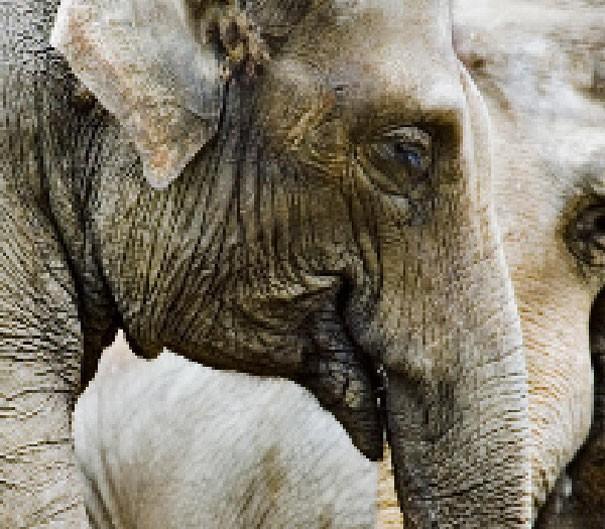 Sự thật đáng buồn về 22 bức tranh của các loài động vật có số lượng pixel tương ứng với số cá thể còn sống - Ảnh 4.