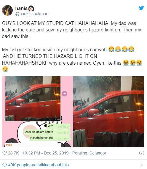 Bị nhốt trong ô tô nhà hàng xóm, chú mèo nhanh trí bật luôn đèn cảnh báo nguy hiểm để gọi sen cứu giúp - Ảnh 1.