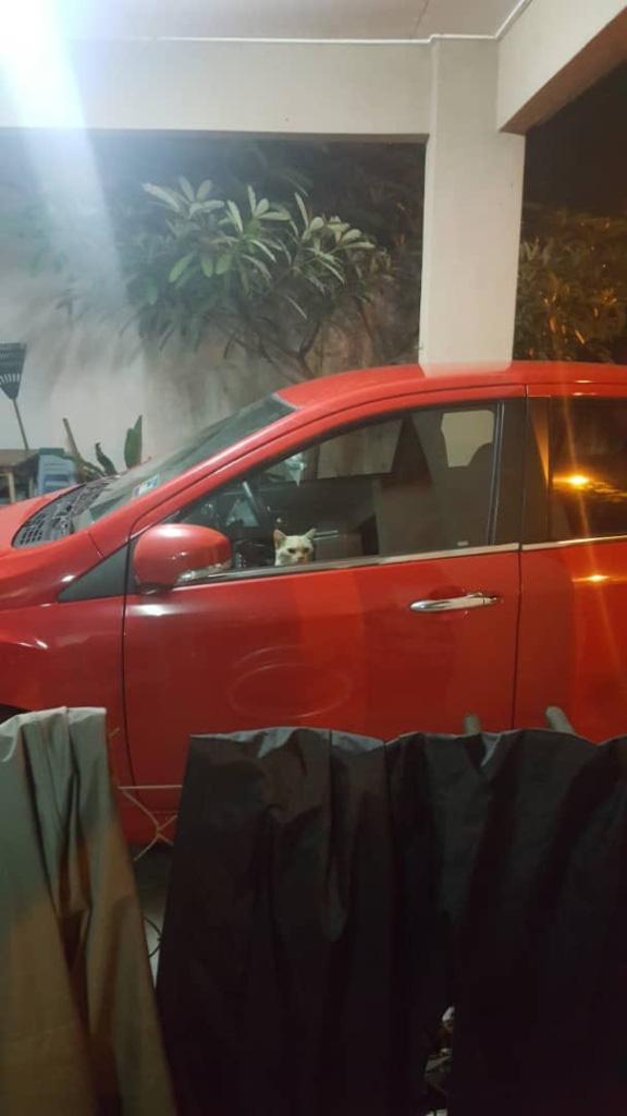 Bị nhốt trong ô tô nhà hàng xóm, chú mèo nhanh trí bật luôn đèn cảnh báo nguy hiểm để gọi sen cứu giúp - Ảnh 2.