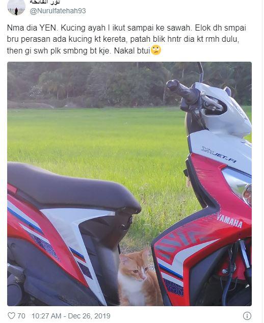 Bị nhốt trong ô tô nhà hàng xóm, chú mèo nhanh trí bật luôn đèn cảnh báo nguy hiểm để gọi sen cứu giúp - Ảnh 4.
