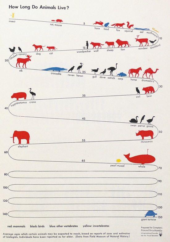 [Vietsub] Tại sao các loài động vật lại có tuổi thọ khác nhau đến vậy? - Ảnh 1.