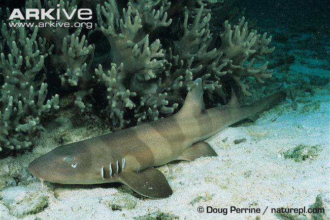 Cá mập đang tiến hóa để có thể đi bộ trên mặt đất - Ảnh 1.