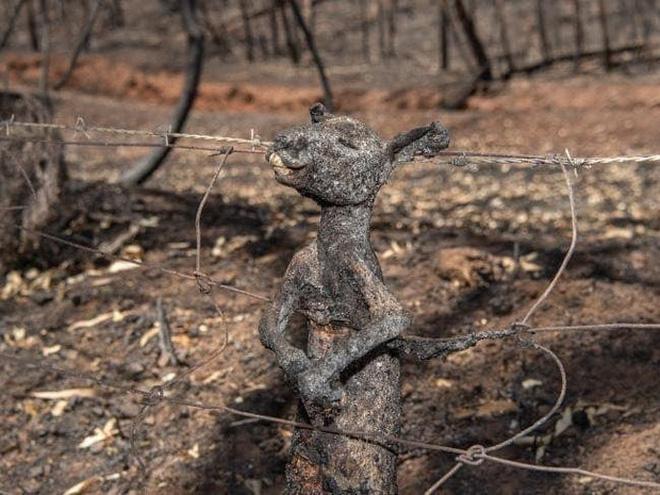 Đại thảm họa cháy rừng Úc nhìn từ không gian: Cả nước như quả cầu lửa, những mảng xanh trù phú bị thay bằng màu khói trắng tang thương - Ảnh 23.