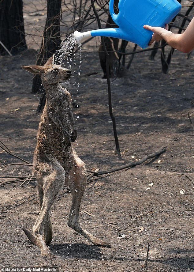 Cháy rừng ở Australia: Mưa lớn đã xuất hiện, trở thành vị cứu tinh cho lính cứu hoả! - Ảnh 1.
